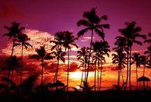 Colors- purple, orange, pink