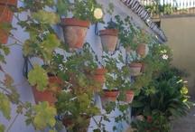 hunging pots
