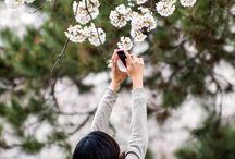 Japanese Cherry Blossom Festival