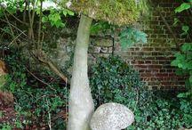 мох в саду