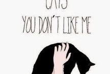 Cute cat sayings