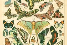 Nature // Butterflies / by Kaci Ferguson