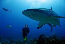 Marine life obsession! / by Molly Gordon