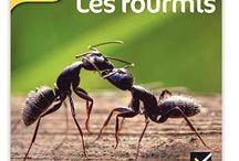 Projet fourmilière