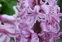 Flowers and Blooms / Flowers and Blooms, stunning photos of flowering plants in gardens