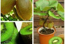 Bitkiler ve meyveler