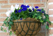 Outdoor-Hanging Colorful Baskets / Tips & Ideas. / by Linda Finni