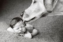 The Pups & Babies / by Lizz Benton