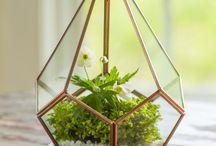 Terrarium ideas / terrariums