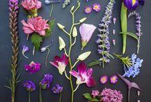 Color palettes — nature