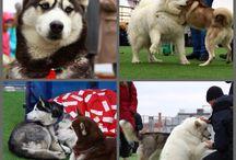 песи, щени и собачки)))