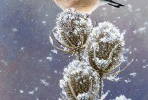 goldfinch-saka