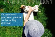 Dog Quotes and Dog Fun Facts