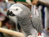 Parrot  Blogs
