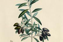 :: Style :: Botanicals