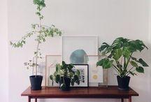 lehet növények nélkül is lakberendezni...de minek:)