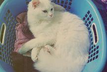 My kitty- Jasmine