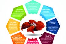 Infographic Bird Nest
