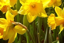 Lente / Spring