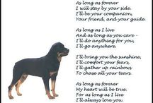 Rotties / by Becky Huling