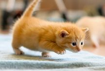 Cute. Cats