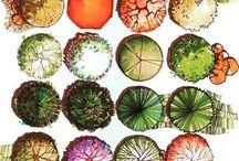 bitki grupları