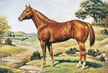 Horse Western Art