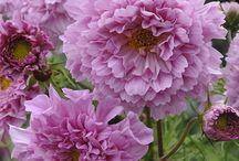 Ønskelige blomsterinnkjøp