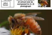 Macro and Close-Up Photography / Tips and examples of macro and close-up photography.