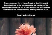 Rare dyr