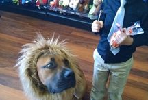 SCARY Cute Halloween Party & Costume Contest / Take a look at the best dressed pets from our in-store SCARY Cute Halloween Party & Costume Contest this past weekend (10.24.15)! Thank you to all of our wonderful contestants! #ScaryCute / by Pet Valu - US