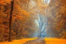 zlota jesień