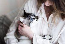 Mon chat - Arya / Mes photos d'Arya, mon petit amour aux doux yeux bleus.