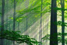 Ağaç ve Orman (Tree & Forest)