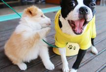 Cute & Fun Dogs / 0