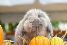 Lovely bunnies ❤️