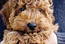 Amaging Doggy