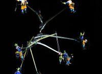 Andersen Festival 2012 / Andersen Festival 2012, 15° anno, Sestri Levante 7-10 giugno 2012. 49 compagnie 99 appuntamenti. Presenze circa 67.000.  Transe-Express (F), Carlo Lucarelli con Marco Bolognesi, Mario Calabresi, Tishani Doshi (Ind) con Medici Senza Frontiere, Marco Pesatori, per capire che ne sarà di noi, Bombastic Orchestra (Ge), Chris Lynam (Uk), La follia di Circolya, Frutillas con crema (Rch), Freakclown, Nefertiti in the kitchen (F), Mike Rollins (Usa/I), Luca Tresoldi (I-Be), Lara Quaglia, Los Filonautas