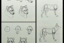 Desenhos de Lobo
