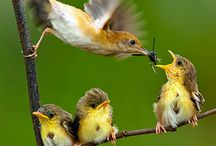 For the Birds / by Shannon Petaja