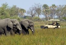Botswana / Follow in the footsteps of Africa's earliest game-viewing explorers on this exclusive, small group safari or escape to the enchanting wilderness on a luxury cruise. Discover the wonders of one of Africa's premier safari destinations as our expert guides introduce you to the fascinating creatures, colorful culture, and stunning landscape.