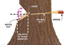 Κοπή δένδρου
