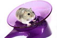 Rusjes & Loopradjes / Russische Dwerghamsters zijn actieve diertjes en ze houden van rennen. Op dit bord plaats ik foto's van onze hamsters en hun loopradjes :) #hamster #dwerghamster #russischedwerghamster