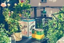 Odling och balkongen