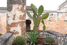 Mediterrán kertek / Mediterrán stílusú kertek