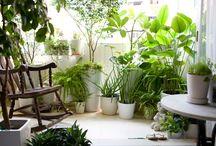 piante - coltivazione, rimedi naturali  malattie / by Mariellam