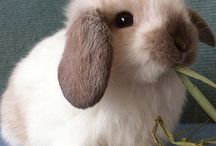 Bunnies / Not a suitable child's pet really should be kept in pairs and with access to grass.