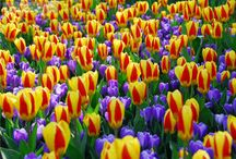::::: Must See Beautiful Spring-time