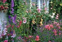 Forhave planter / Smukke planter der klær hinanden