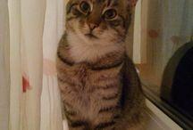 Kiri .  Kitty / Pisicute